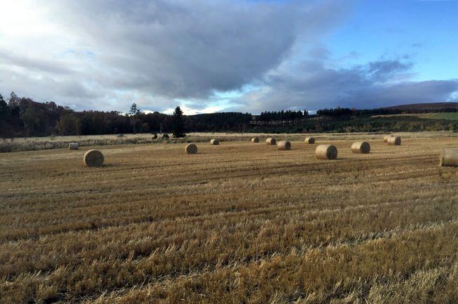 scotland-barley-chivas