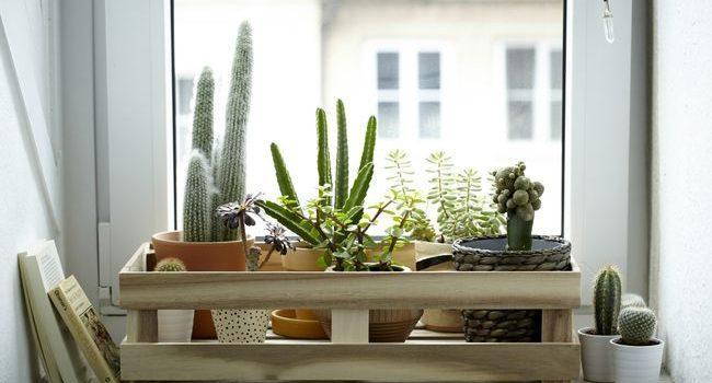 IKEA o viata mai sustenabila
