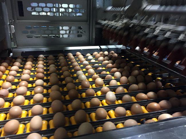 ouă toneli